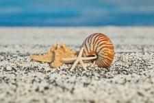 deniz kabuklari 2